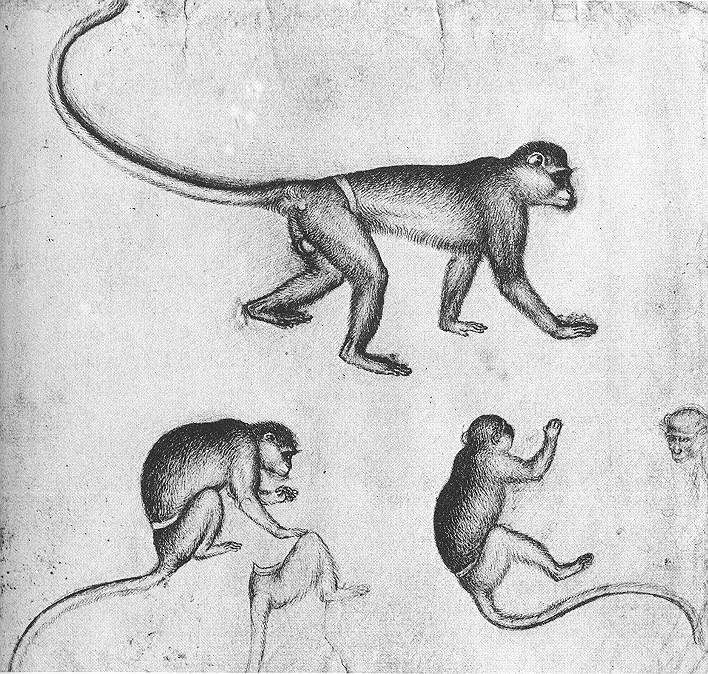 Image detail for -Apes - from the artists sketchbook by Pisanello, 1430