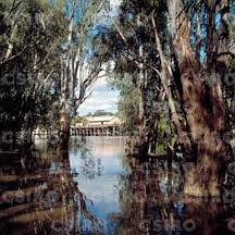 THE MIGHTY MURRAY RIVER...