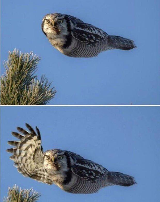Bildergebnis für owl waving meme