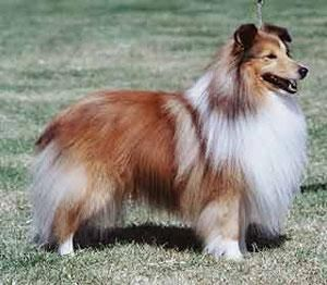 Here is a list of double-coated dogs. Double coated dogs should never be shaved; their coats act as a protective barrier from summer heat and scorching sun rays.