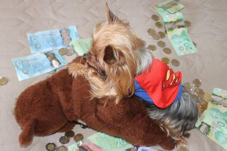 Takedown..Superdog Saves The Day