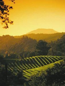 "Sonoma, CA. It's such a blessing that we have this kind of beauty only about an hour away...Napa is amazing as well-it gives us city dwellers a chance to experience a ""real summer"" when we are freezing in town!"