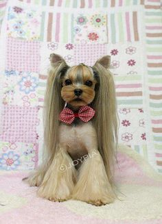 Yorkshire Terrier groom... bell bottoms and pig tails. Looks like a stuffed animal; so cute!