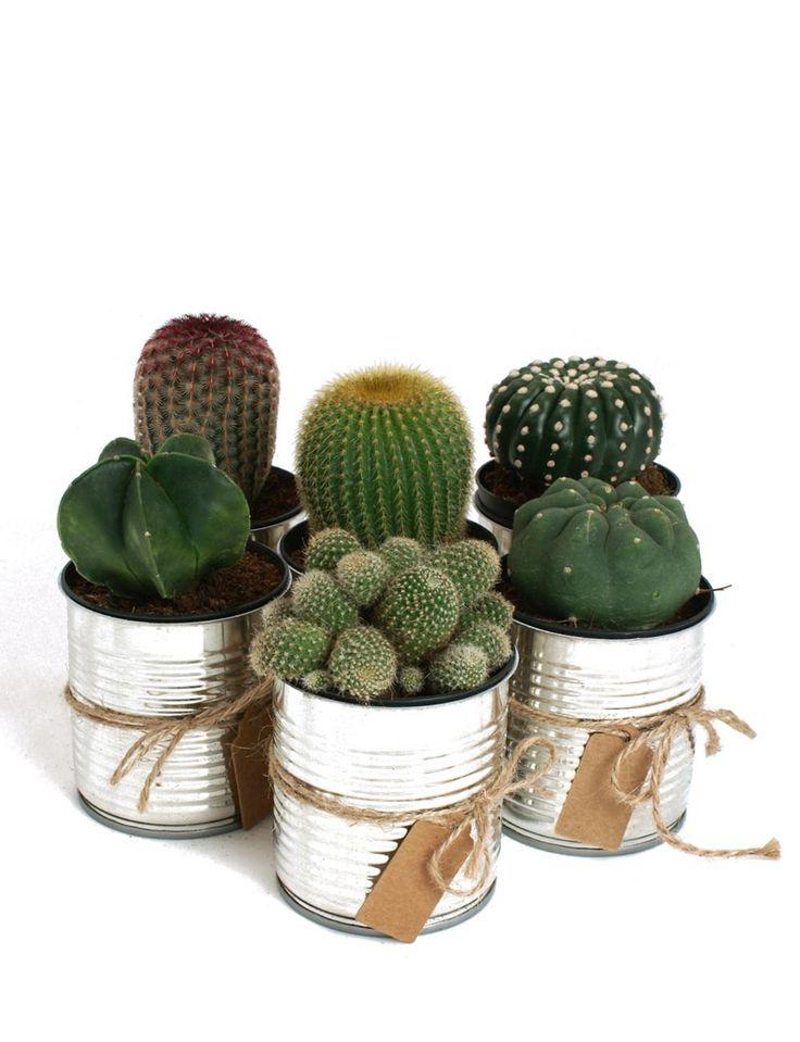 baby baptism photo ideas - Conjunto de cactus en lata metalica de Apucoco