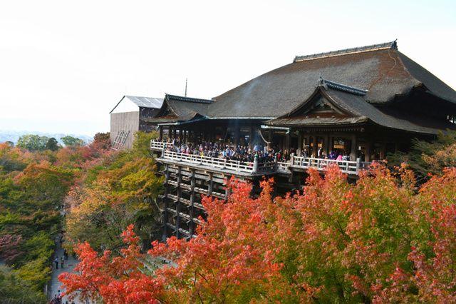 """京都市東山区の清水寺で、「清水の舞台」周辺の木々の葉が、次第に赤く染まってきた。Kyouto-shi Higashiyama-ku no Kiyomizu-dera de, """"Kiyomizu no Butai"""" shuuhen no kigi no ha ga, shidai ni akaku somatte kita. Di kuil Kiyomizu-dera distrik Higashiyama - Kyoto, daun pepohonan di sekitar """"Panggung Kiyomizu"""", perlahan sudah mulai tersaput merah."""