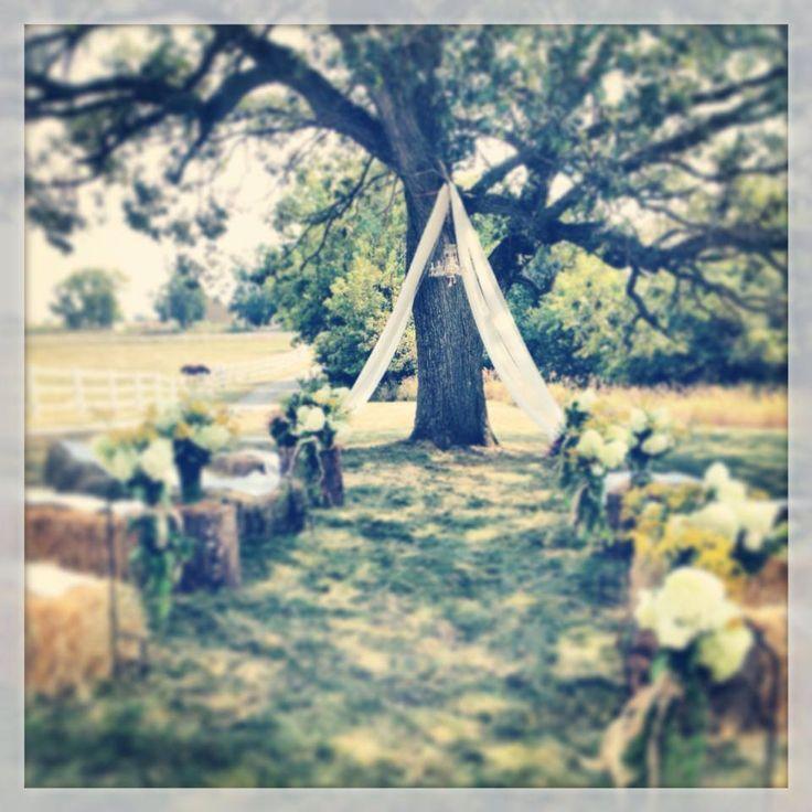 Ceremony Under A Tree: Best 25+ Tree Wedding Ceremonies Ideas On Pinterest