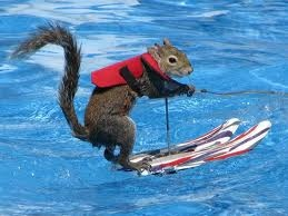 Water Squirrel