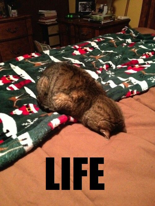 Life. Funny cat pic Check out awesome Cat Tees at http://presentpuppy.com/cats/                                                                                                                                                      More