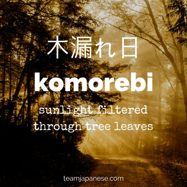 Komorebi: the Japanese word for sunlight filtered through trees. For more beautiful and untranslatable Japanese words, visit teamjapanese.com