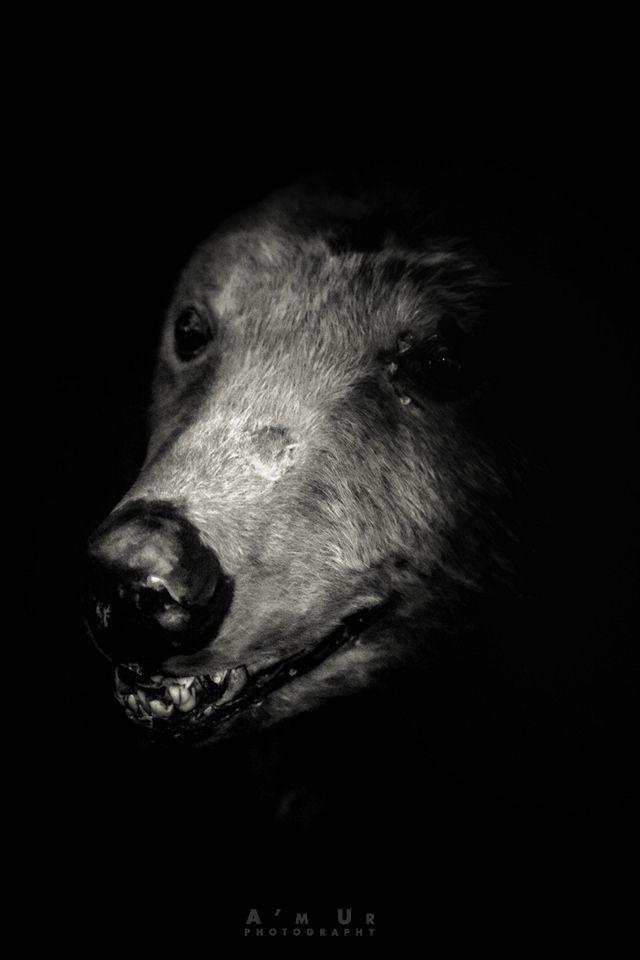 Fotospacer z Olympusem po Mazowszu II – Podkowa Leśna  ©Arek Uriasz