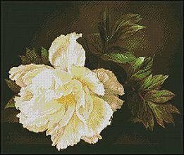 Návody a literatúra - Biely kvet - predloha na vyšívanie - 5961464_