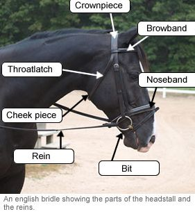Riding Equipment: The English Bridle