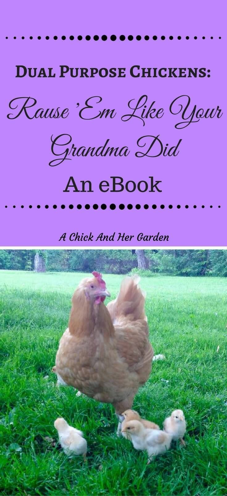 7022 best backyard chickens images on pinterest raising chickens
