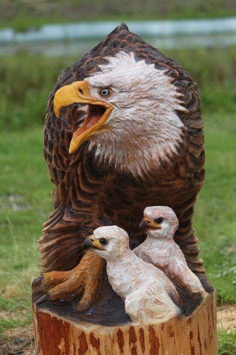 Best eagles images on pinterest eagle bald and