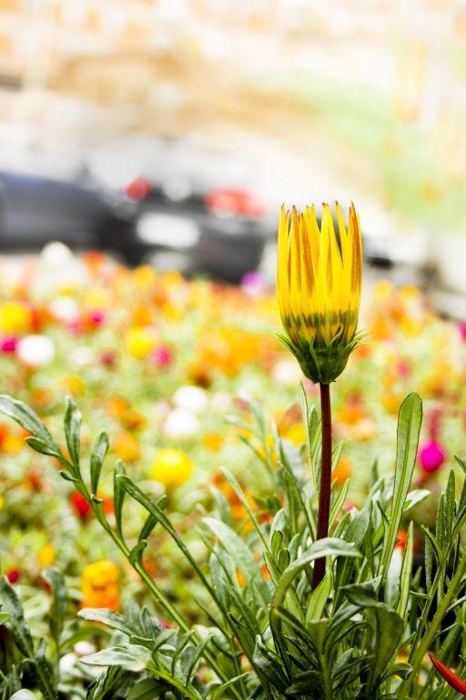 """Dream flower by L. Veronesi - """"Sogno... un prato fiorito che sommerga il cemento"""" #fiore #arredamento #country #chic"""