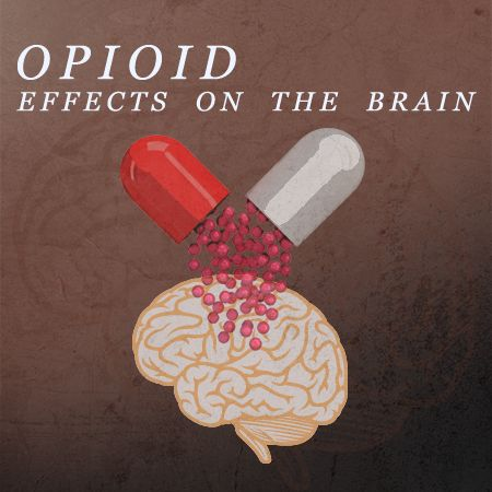 Opioids work by attaching to opioid receptors in the brain, dulling pain, stimulating the reward system in the brain, and increasing the production of the neurotransmitter dopamine which gives the user a euphoric feeling.