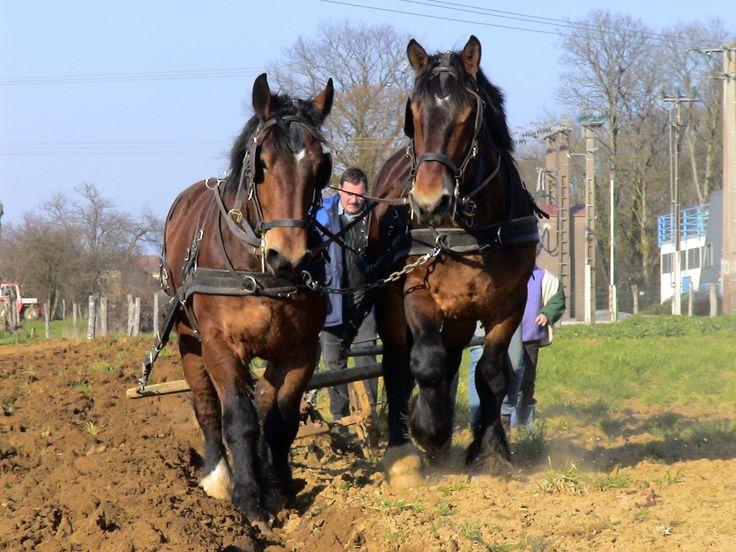Les 94 meilleures images du tableau le cheval au travail - Dessin cheval de trait ...