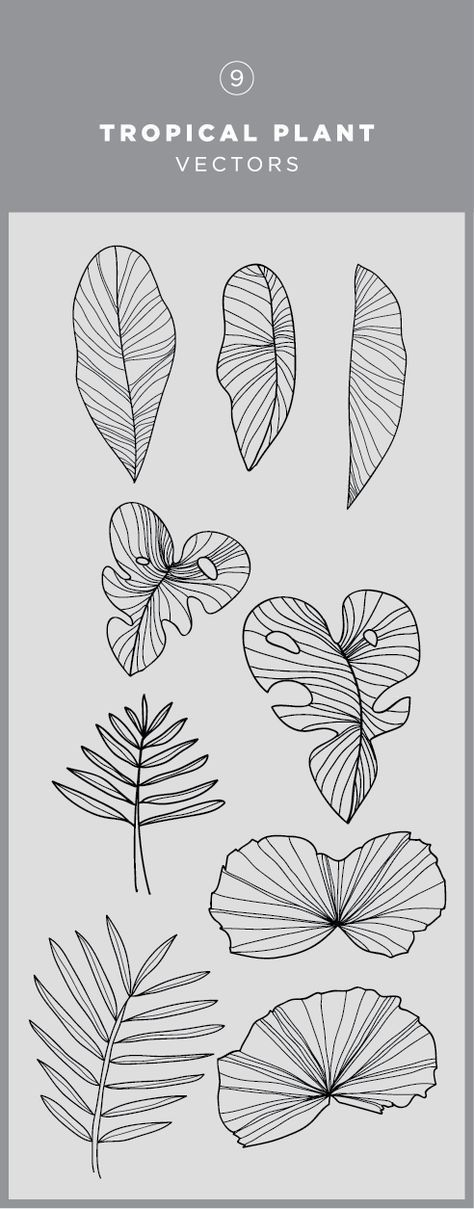 Illustrated tropical plants vector graphic