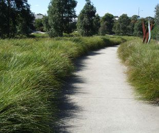 Fence, entry path borders. TANIKA® Lomandra is a reliable, tough and beautiful landscape plant | Strappy Leaf Plants