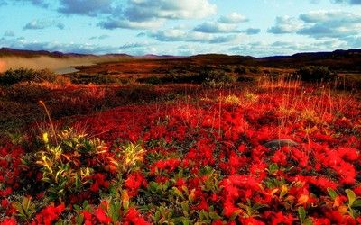 Red flowers in spring wallpaper