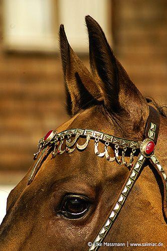 Akhal Teke Stallion   SALMIAC · Grafikstudio   Flickr