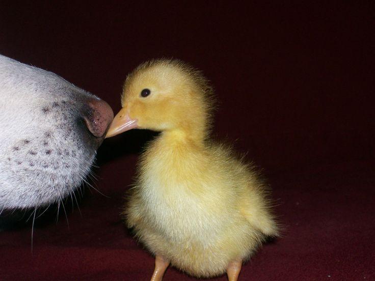 Internationaler Tag des Kusses – Nicht nur menschliche Wesen tun es, auch im Tierreich wird geküsst   vivasworld