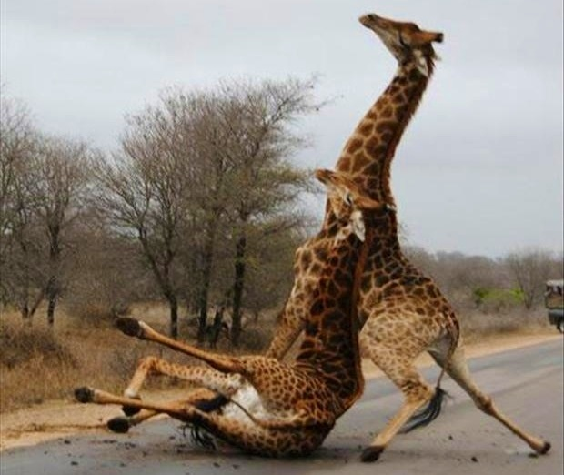 VIDA Statement Bag - Wild Giraffe by VIDA 1VTka