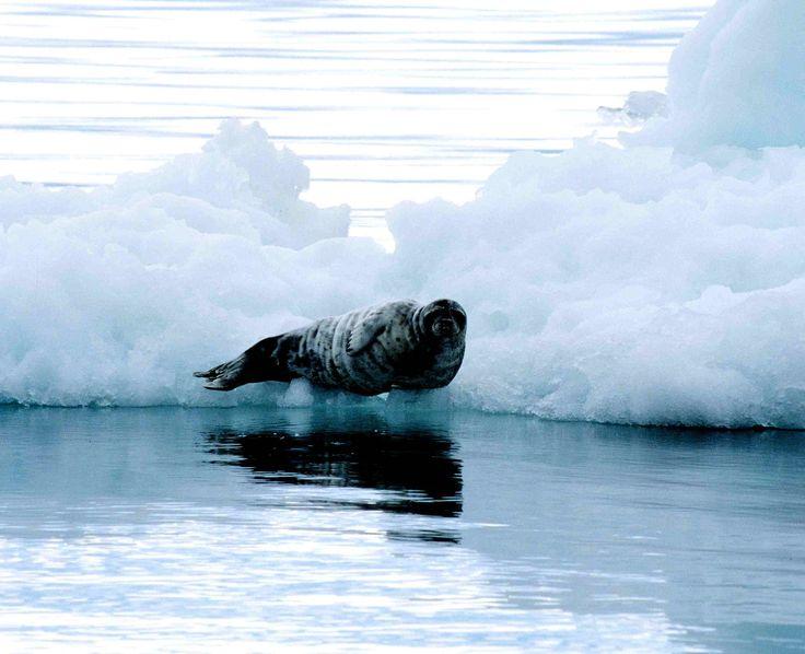 Très Les 101 meilleures images du tableau Mammifères marins (marin  XT97