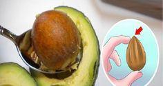 Não jogue o caroço de abacate fora: pesquisas revelam que ele nos protege de doenças como câncer, diabetes e hipertensão | Cura pela Natureza