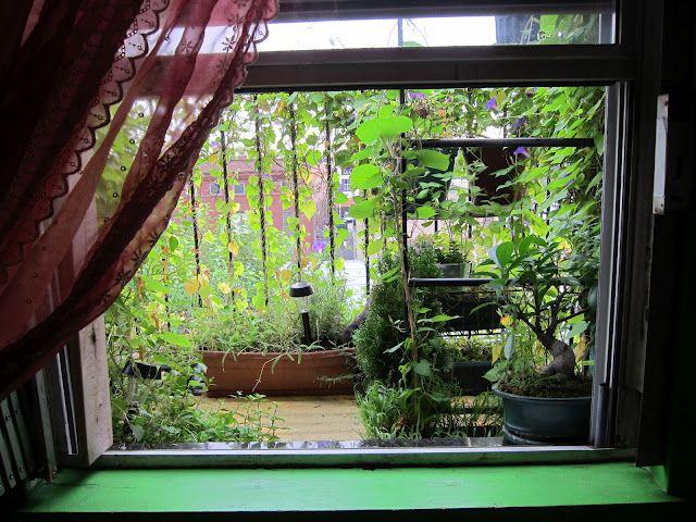 Fire escape garden. pretty cute I would say!