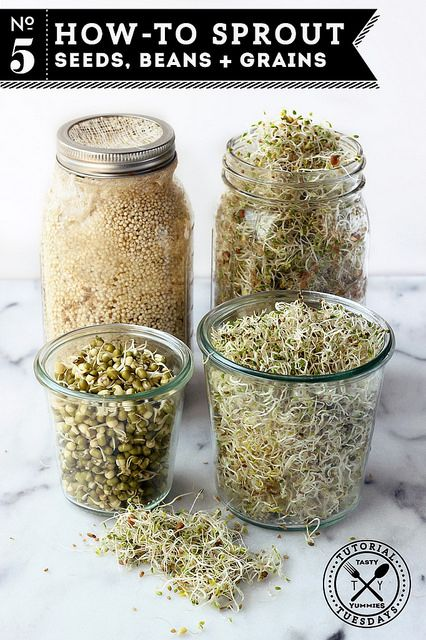 How-to Sprout: Seeds, Beans and Grains by Tasty Yummies, via Flickr