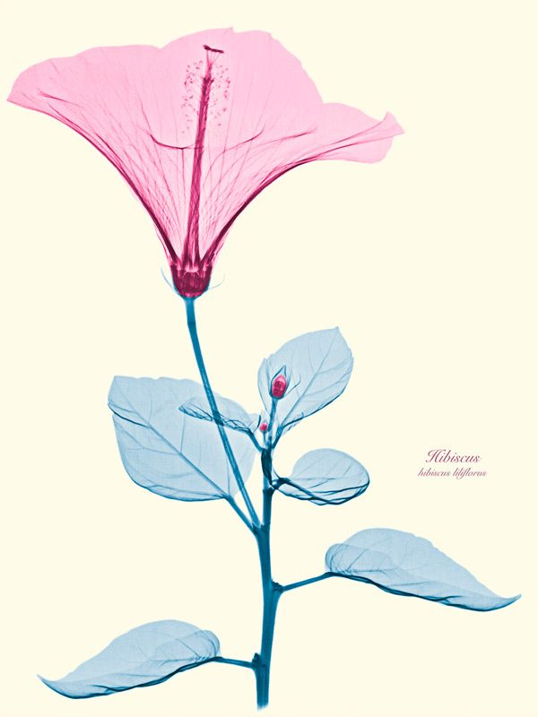 Floral X-Rays by Brendan Fitzpatrick