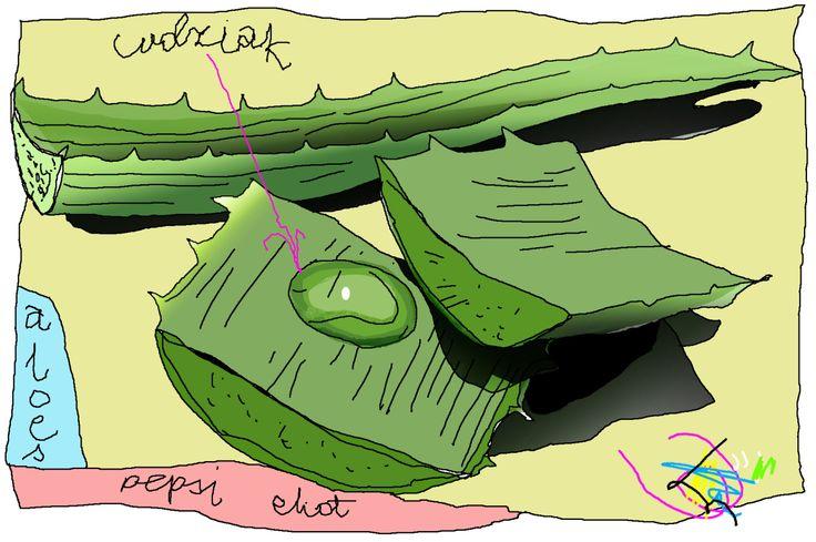 Aloes broni, aloes radzi, aloes nigdy was nie zdradzi, Aloesmisja  #aloes #aloeskontrowersje