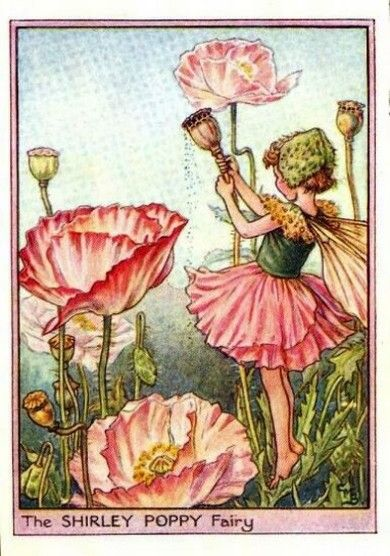 Google Afbeeldingen resultaat voor http://www.flowerfairyprints.com/wp-content/uploads/2012/08/Shirley-Poppy-Flower-Fairy.jpg