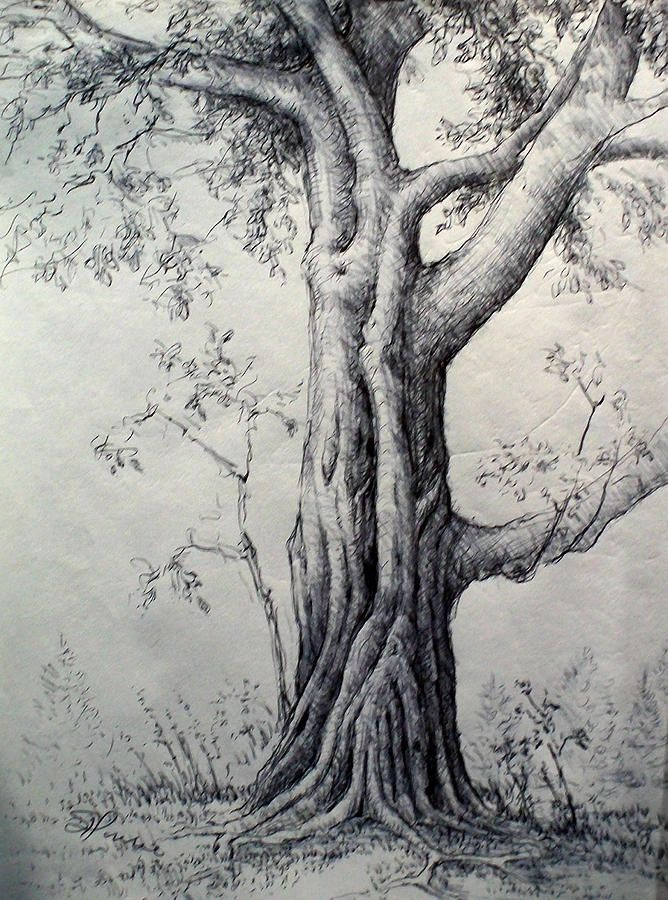 54 best images about how to draw realistic trees plants for Best tree drawing