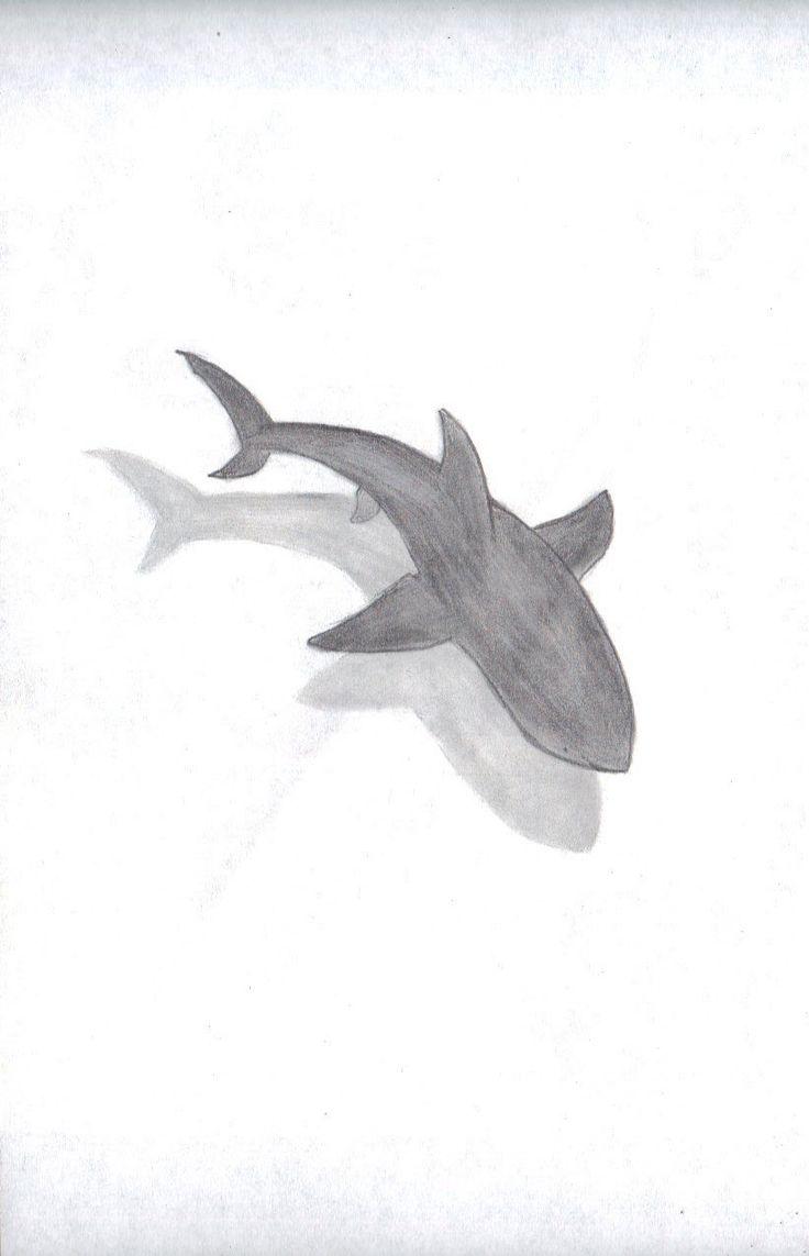 "Shark By ""Kyah Leanne"""