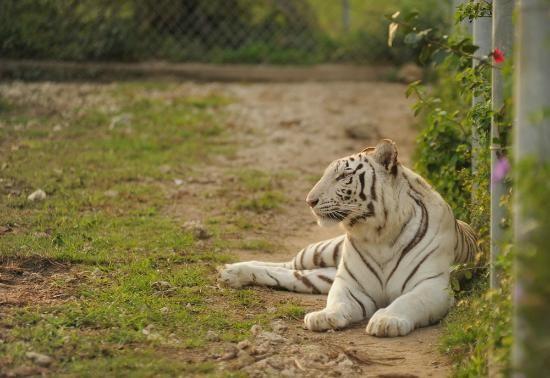 Zoological Wildlife Foundation Miami