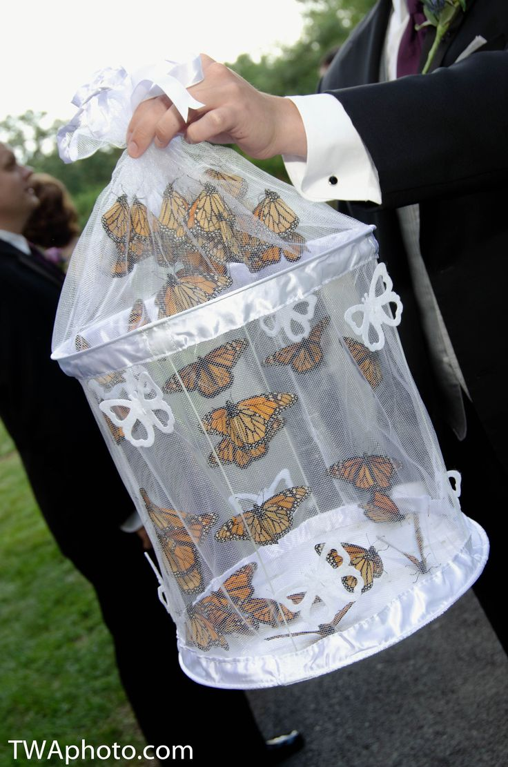Butterflies to release at the ceremony can be a great way to involve children or a blended family... Wedding ideas for brides, grooms, parents & planners ... https://itunes.apple.com/us/app/the-gold-wedding-planner/id498112599?ls=1=8 … plus how to organise an entire wedding ♥ The Gold Wedding Planner iPhone App ♥
