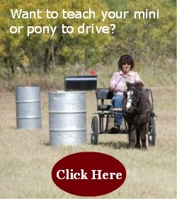 Want to teach your mini or pony how to drive? I offer lesson and online courses where you can learn from the privacy of your own home.