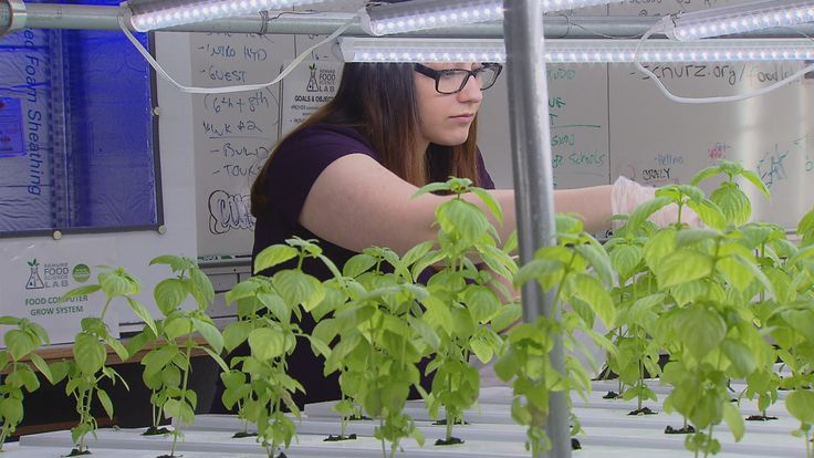 """""""The whole idea is to use our vacant land as a way to adjust the issue of food access by encouraging urban farms and community gardens in certain areas,"""" said state Rep. Sonya Harper."""