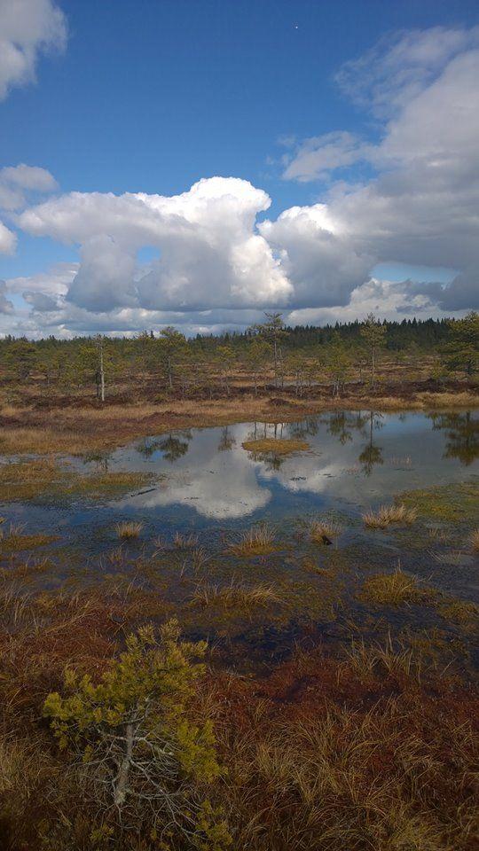 Torronsuo National Park, Suomi
