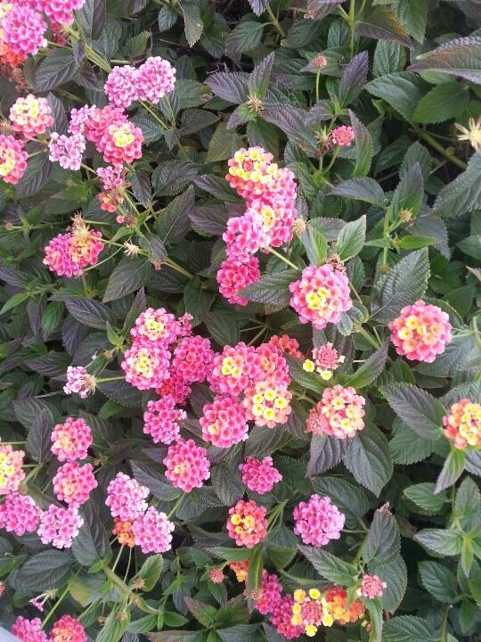 Pretty flower bush