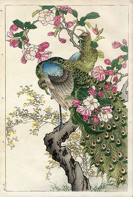 Peacock, Apple Blossom. 1899 \\ Japanese Woodblock prints by Kono Bairei (1844-1895)