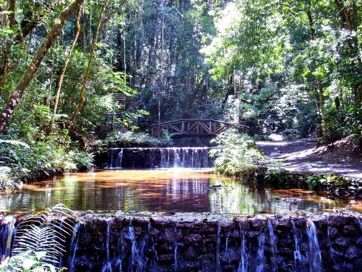 Parque das Mangabeiras - Belo Horizonte - Minas Gerais - Pesquisa Google
