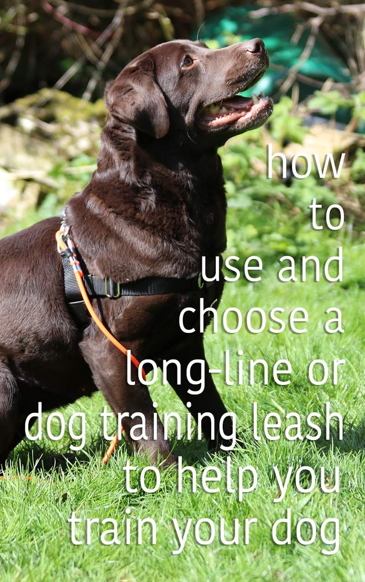 Using a long line is a great way to help with your dog training. Get our long-line tips from a professional dog trainer