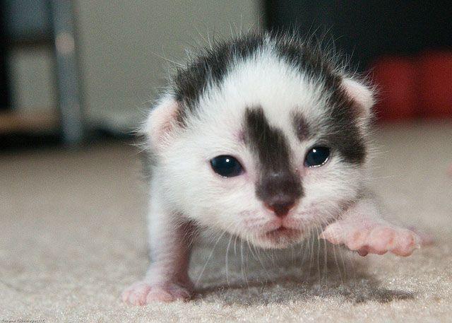 Islamist.. Rasier Midget cat video