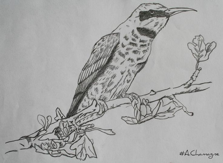 Audrey Chamagne Oiseau Passion Of Drwing Dessin