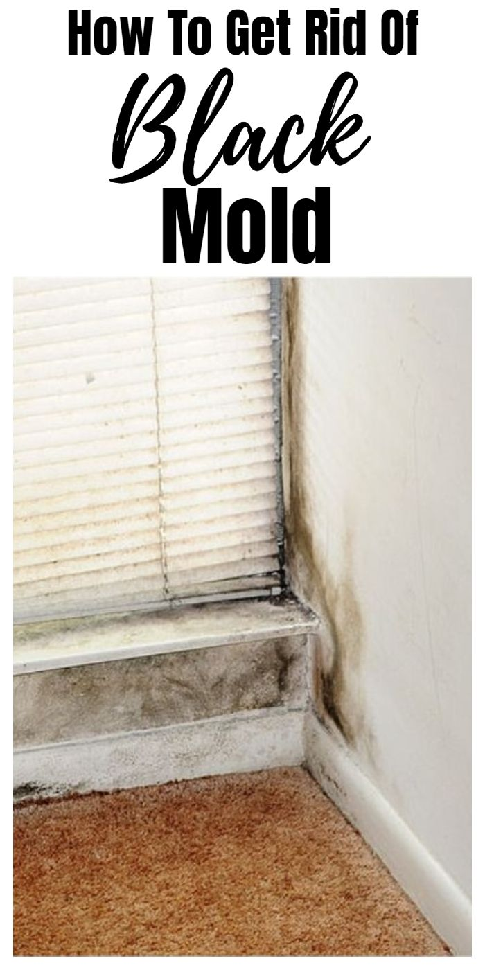 0a50b0eef182816e36dd081b896a7761 - How To Get Rid Of The Mold In The House