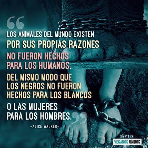 #Frases #Alice #Walker #Veganismo #vegano