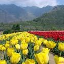 Srinagar Gulmarg Pahalgam Holiday Package - http://www.nitworldwideholidays.com/kashmir-tour-packages/kashmir-package-tour.html